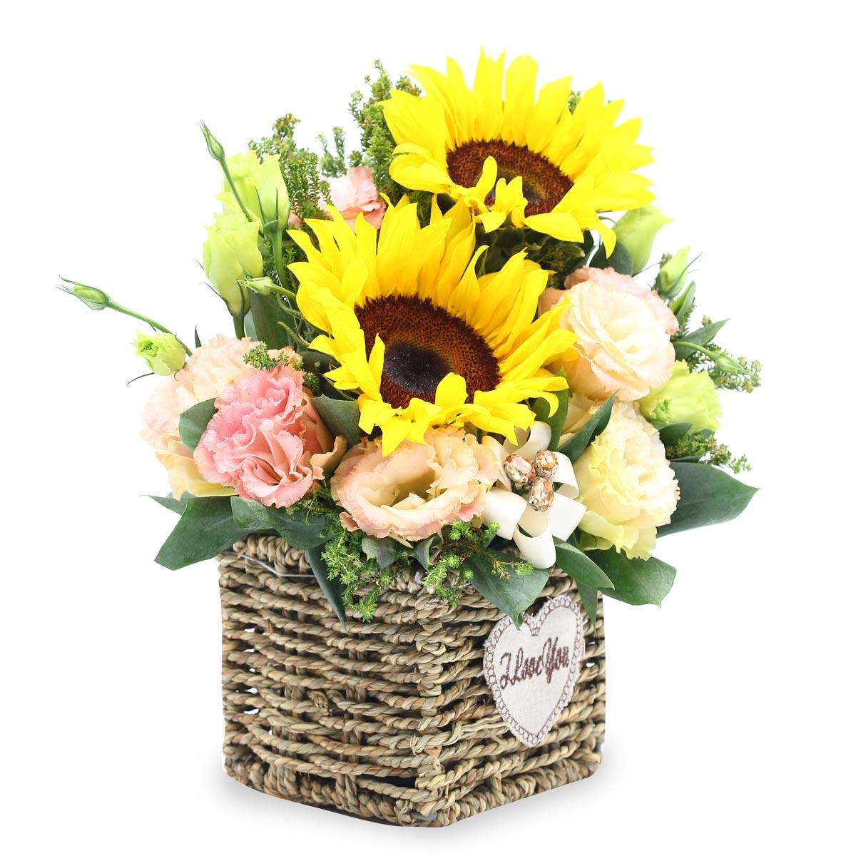 TP1702 Sunburst Delight sunflower arr
