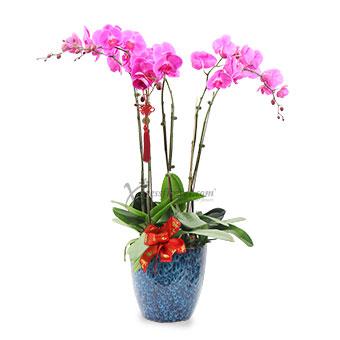 Amethyst Elegance (CNY 6 stalks Orchid Arrangement)