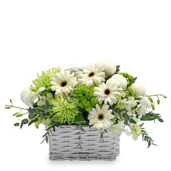 Sweet Comfort (Funeral Flower)