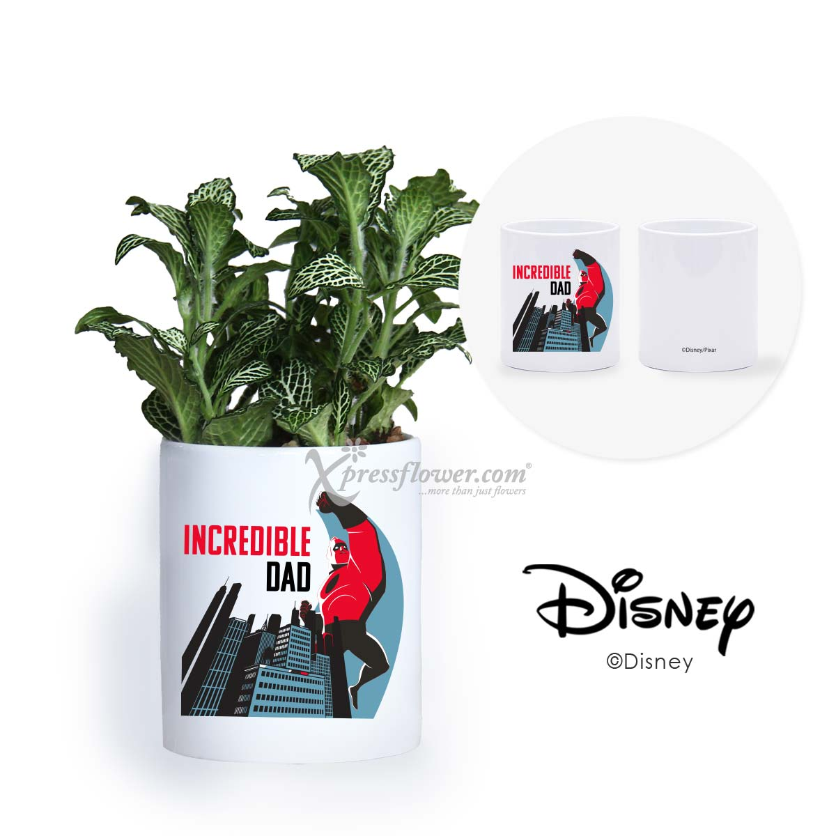 Incredible Dad (Fittonia plant with Disney holder)