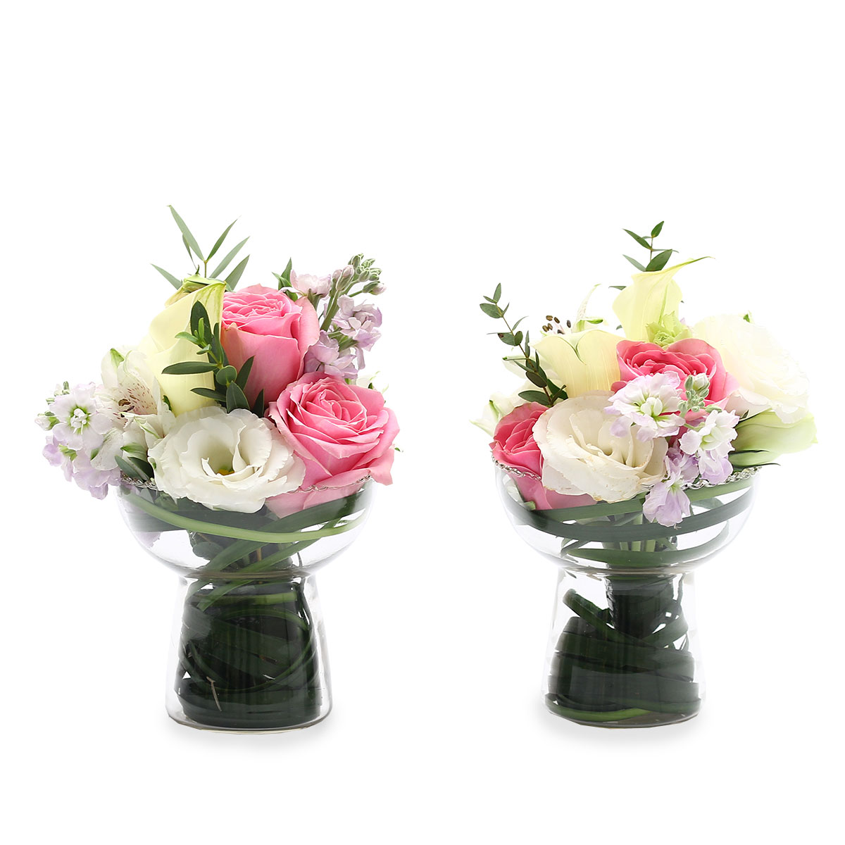 WD1703 Newlywed Romance Revival rose