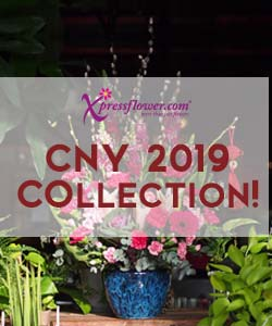 CNY Collection 2019