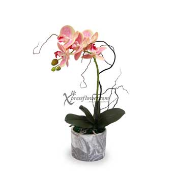 Lucky Treasure (Artificial Orchid)