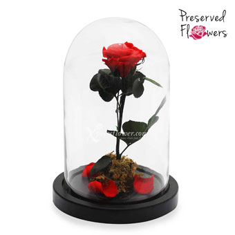 The Perfect Tale (Preserved Flowers)