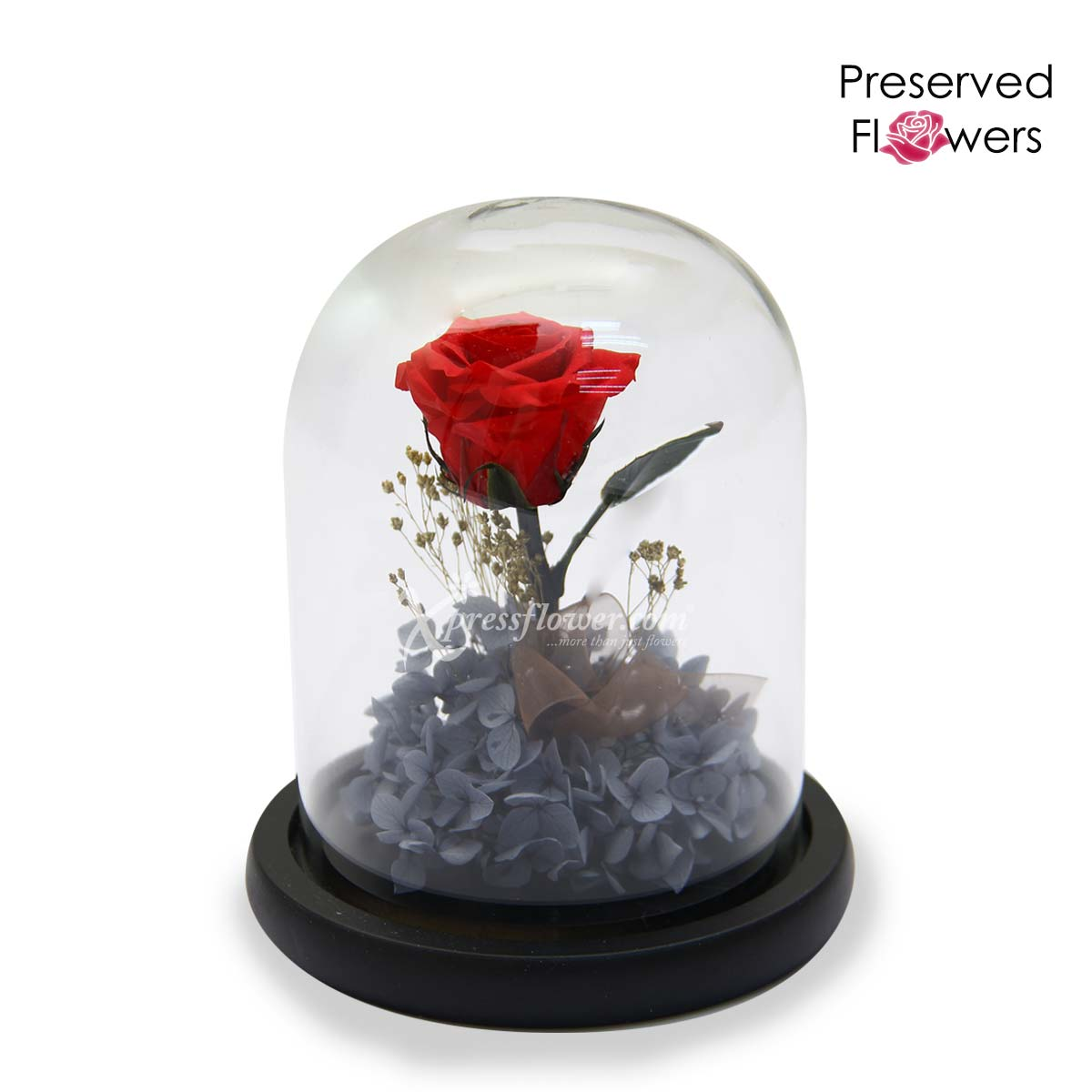 Love at Midnight (Preserved Flowers)
