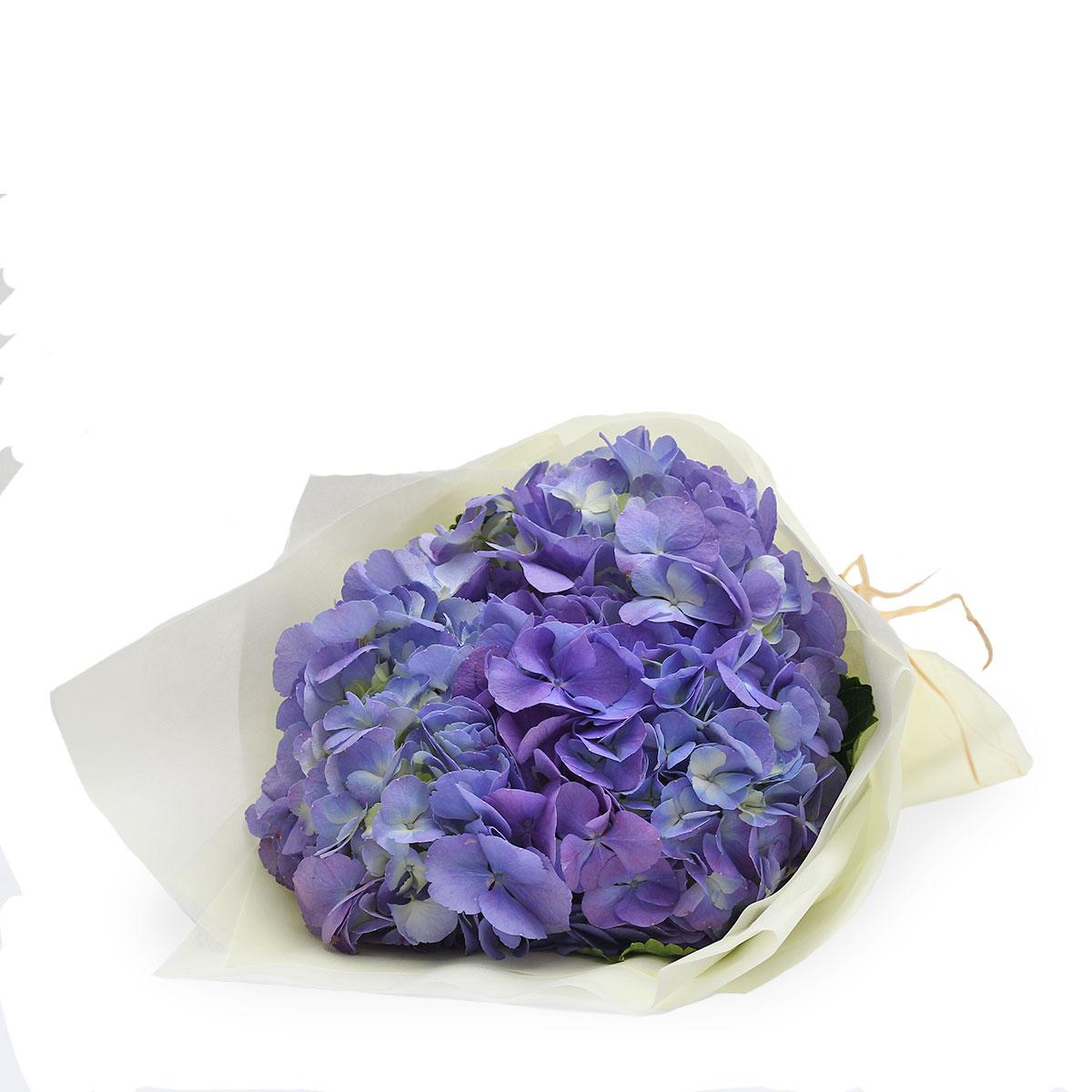 BQ1748 rustic radiance blue hydrangea