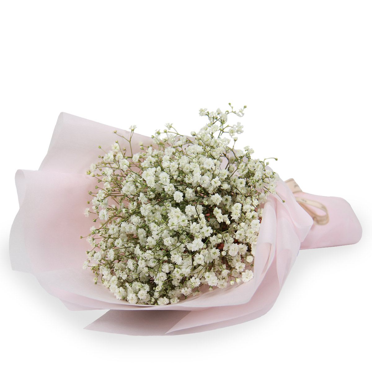 ND1702 pure at heart baby breath