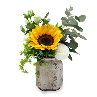 Sun-Kissed (1 Sunflower with White Rose Spray)