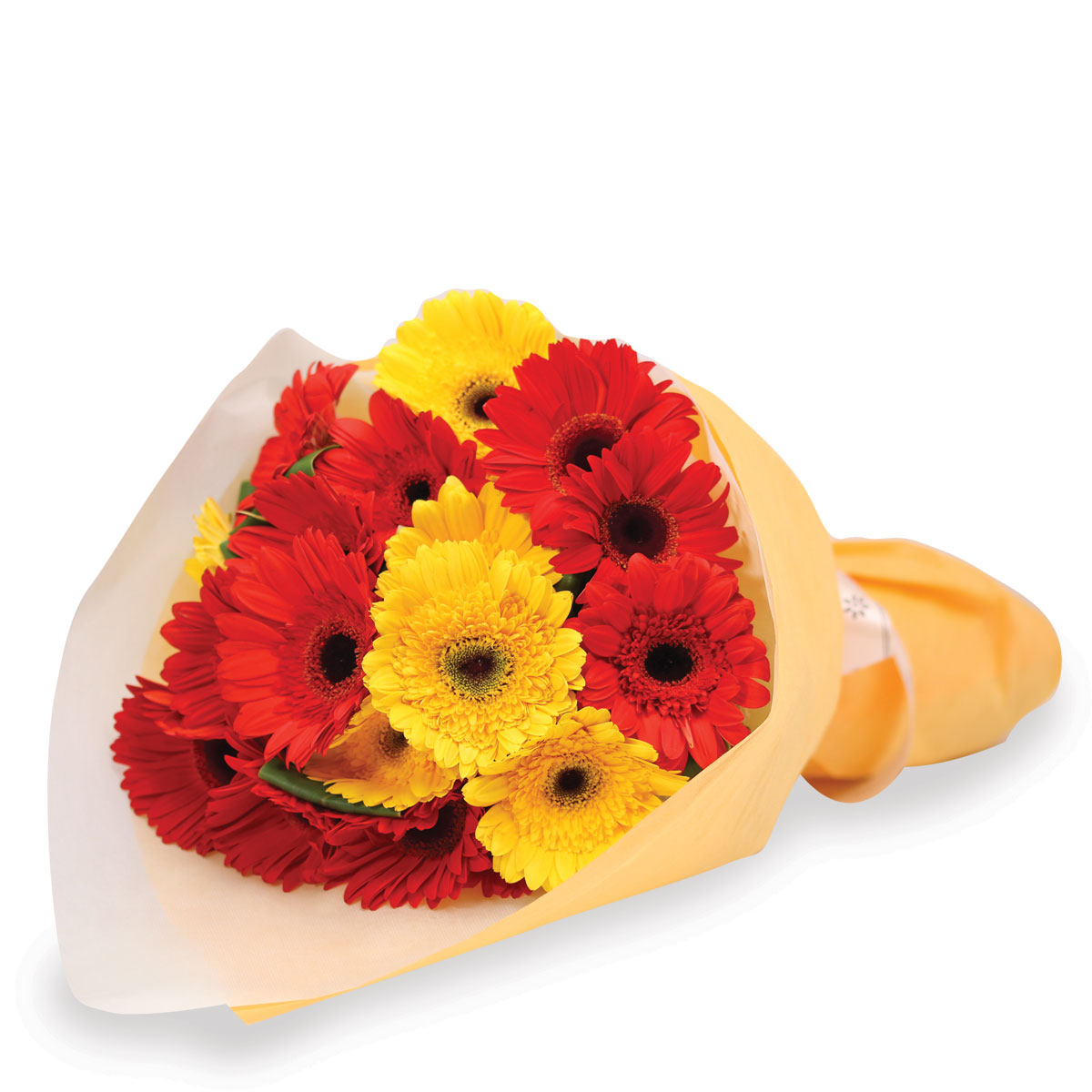 VP1624  Dainty Cheerleader Mixed gerbera  value packed