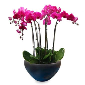 Flourishing Elegance (Orchid Plant)