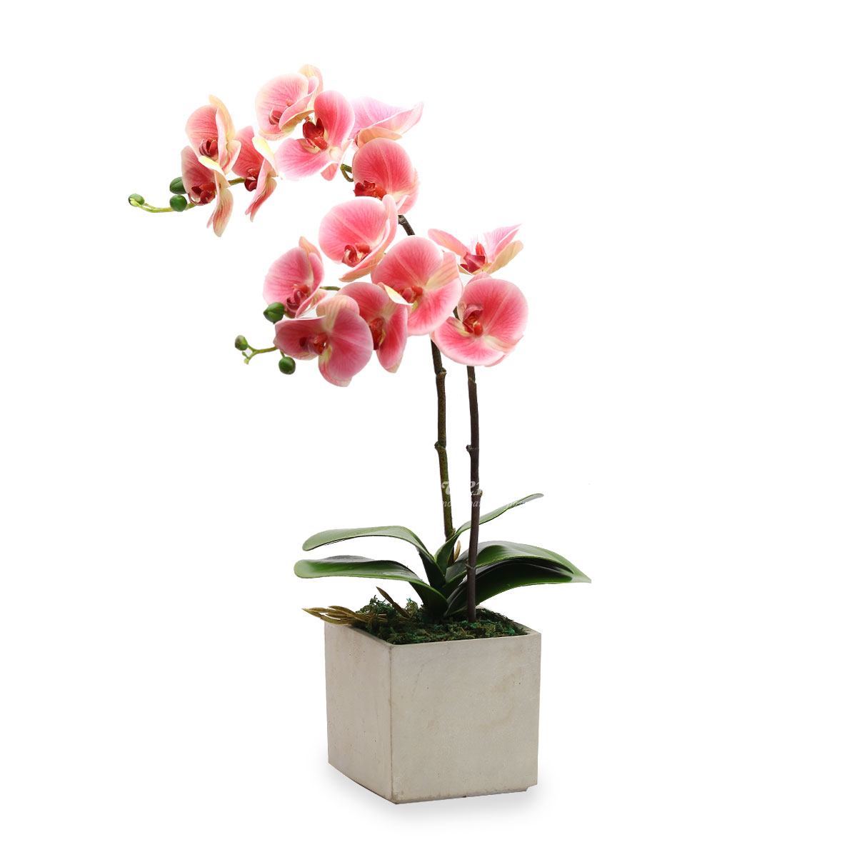 Cherished Appeal (Artificial Orchids)