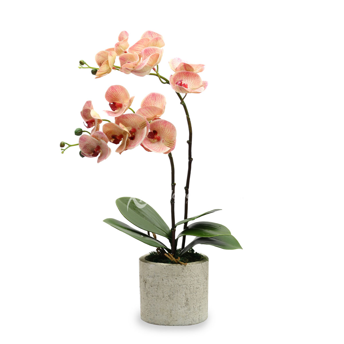 Divine Flair (Artificial Orchids)