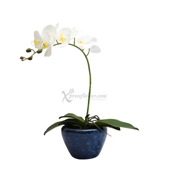 Frosted Beauty (ARTIFICIAL ORCHID)
