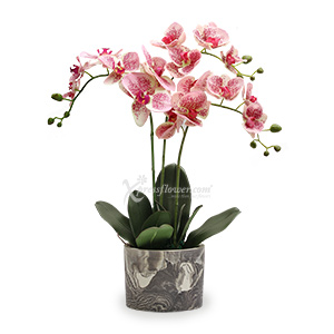 Bashful Butterfly (Artificial Orchid)