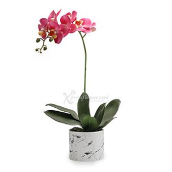 Bold Heart (Artificial Orchid)
