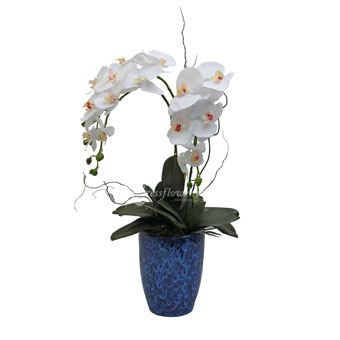 Impeccable Beauty(Artificial Orchid)