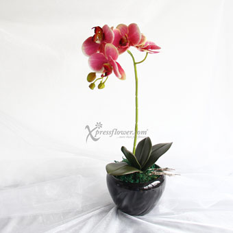 Charming Beauty (Artificial Orchid)