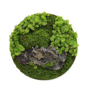 Lush Tranquility (Dried Moss)