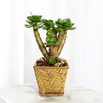 Un-rattan-ly Gorgeous (Portulaca Molokiniensis Plant)