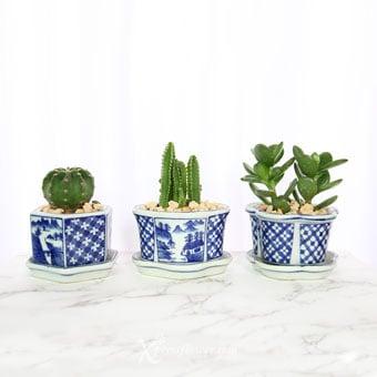 Triple Cacti (Cactus Plant)