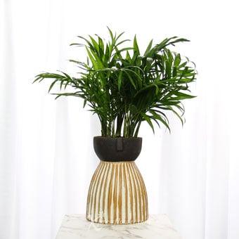 Serene Wilderness (Palm Plant)