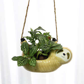 Sway With Me (Fittonia Plant)