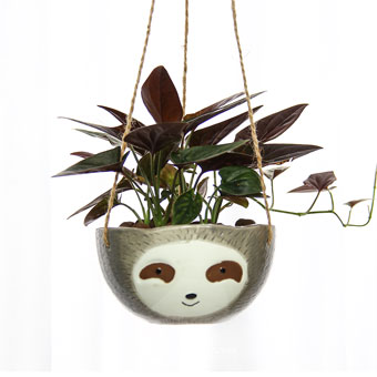 A Cupful Mischief (Syngonium Chocolate Plant)