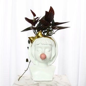 Baby Pops (Syngonium Chocolate Plant)